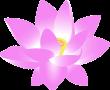 flower-159951_640